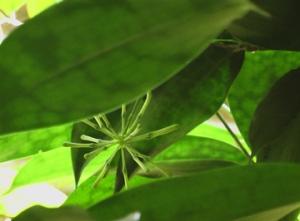 bamboo-flower