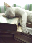 Oliver Sleeps