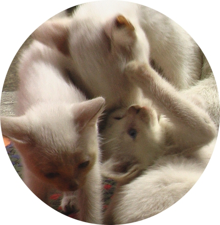Mother Cat & Children