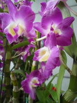 Orchid in Hongkong Hotel-Feb