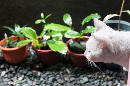 Oliver in Focus