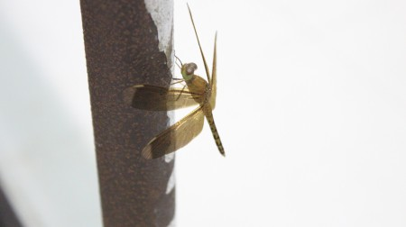 To find this dragon fly at night, in a room with no windows was kind'a weird...